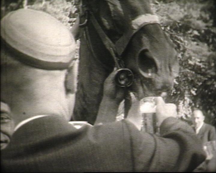 Ein Pferd trinkt Bier